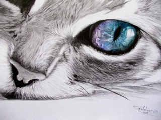 Dibujos de gatos a lapiz 2