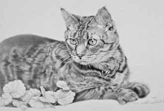 Dibujos de gatos a lapiz 3