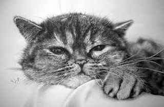 Dibujos de gatos a lapiz 4
