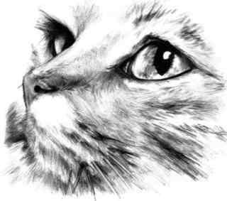 Dibujos de gatos a lapiz 5