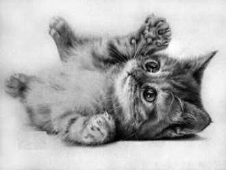 Dibujos de gatos a lapiz