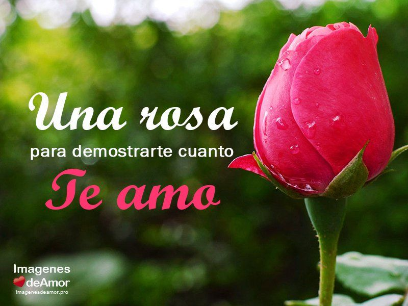 Imágenes Con Frases Chidas Para Celular De Amor Románticas: 18 Imágenes Chidas De Amor Con Frases GRATIS