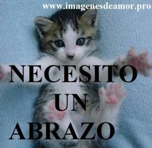 abrazo-gatito-300x291.jpg
