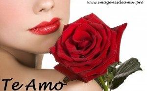14 Imagenes De Hermosas Rosas Con Frase Te Amo