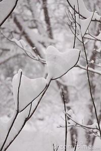 corazone-nieve-200x300.jpg