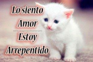 Imágenes De Lindos Gatitos Con La Frase Perdóname Mi Amor