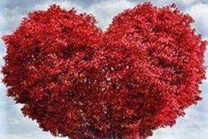 frases de amor dibujo corazon