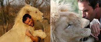 imagen de leon cariñoso