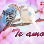 imagenes-de-aves-enamoradas-1-150x150.jpg