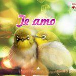 imagenes-de-aves-enamoradas-3-150x150.jpg