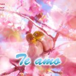 imagenes-de-aves-enamoradas-4-150x150.jpg