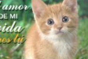 8 Imágenes De Gatitos Tiernos Con Lindas Frases De Amor