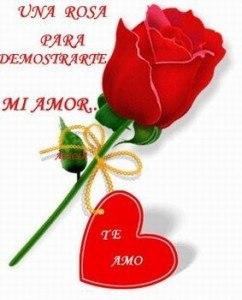Rosa Amor