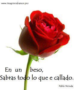 rosa-hd1-247x300.jpg