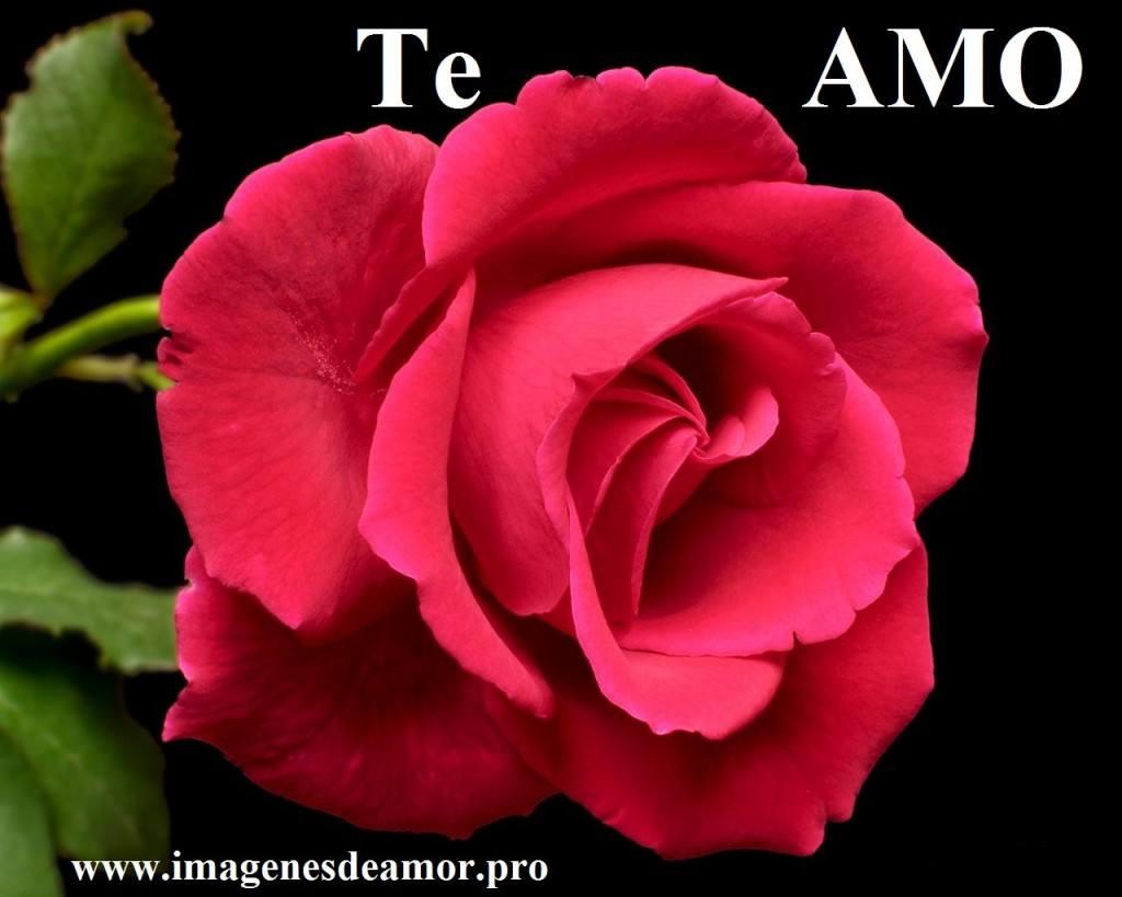 rosa-hermosa2-1024x819.jpg