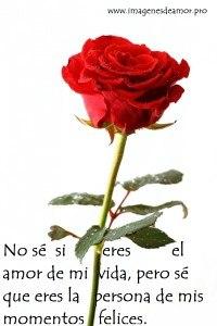rosa-natural-200x300.jpg