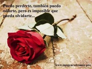 rosa-solitaria2-300x225.jpg