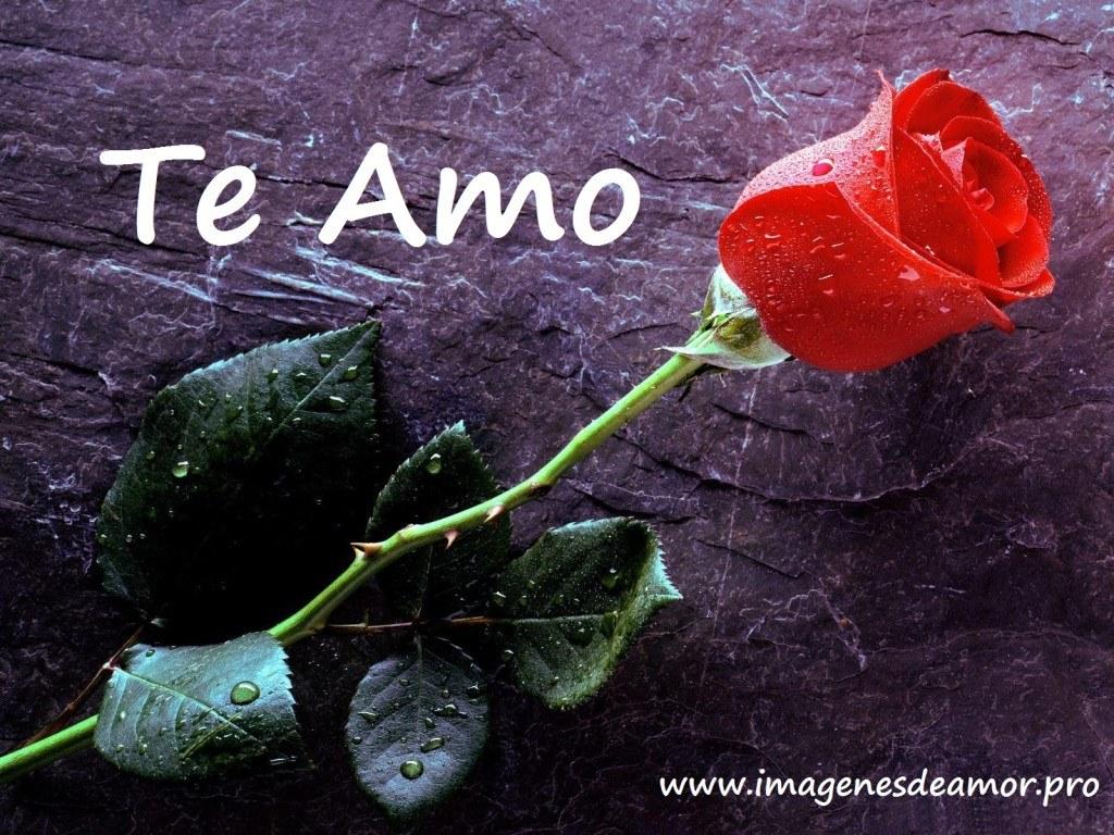 rosa_piso-1024x768.jpg