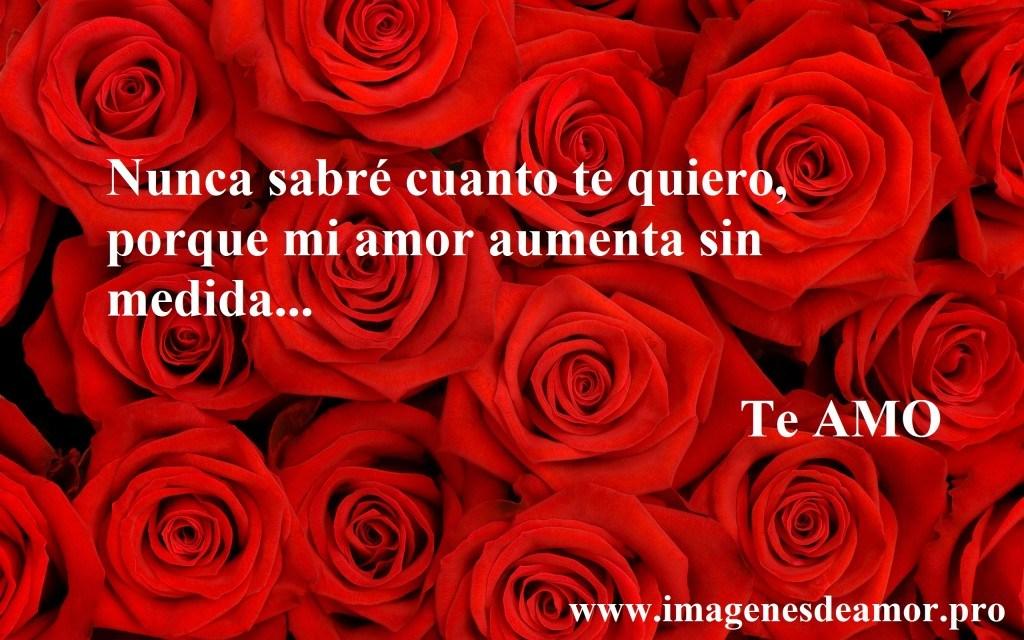 rosas-fondo2-1024x640.jpg