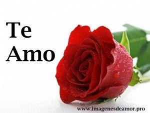 rosio-rosa-300x225.jpg
