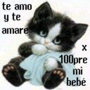 Tierno Gatito Con Frase Te Amo Bebe Para Facebook